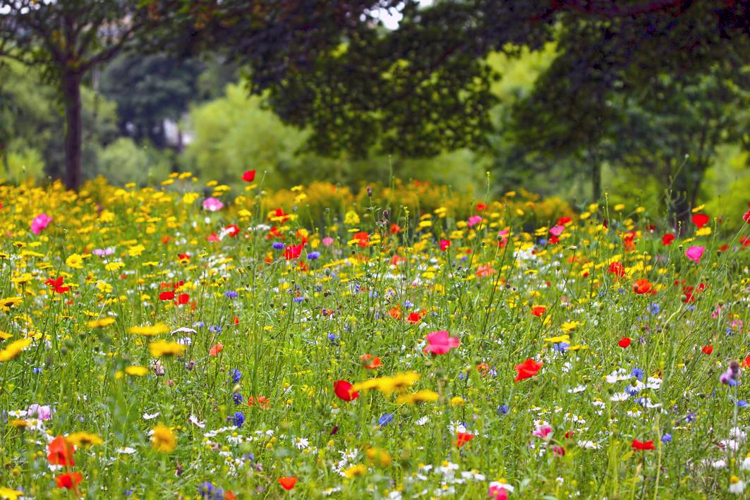 Meadows at Figgate Park.