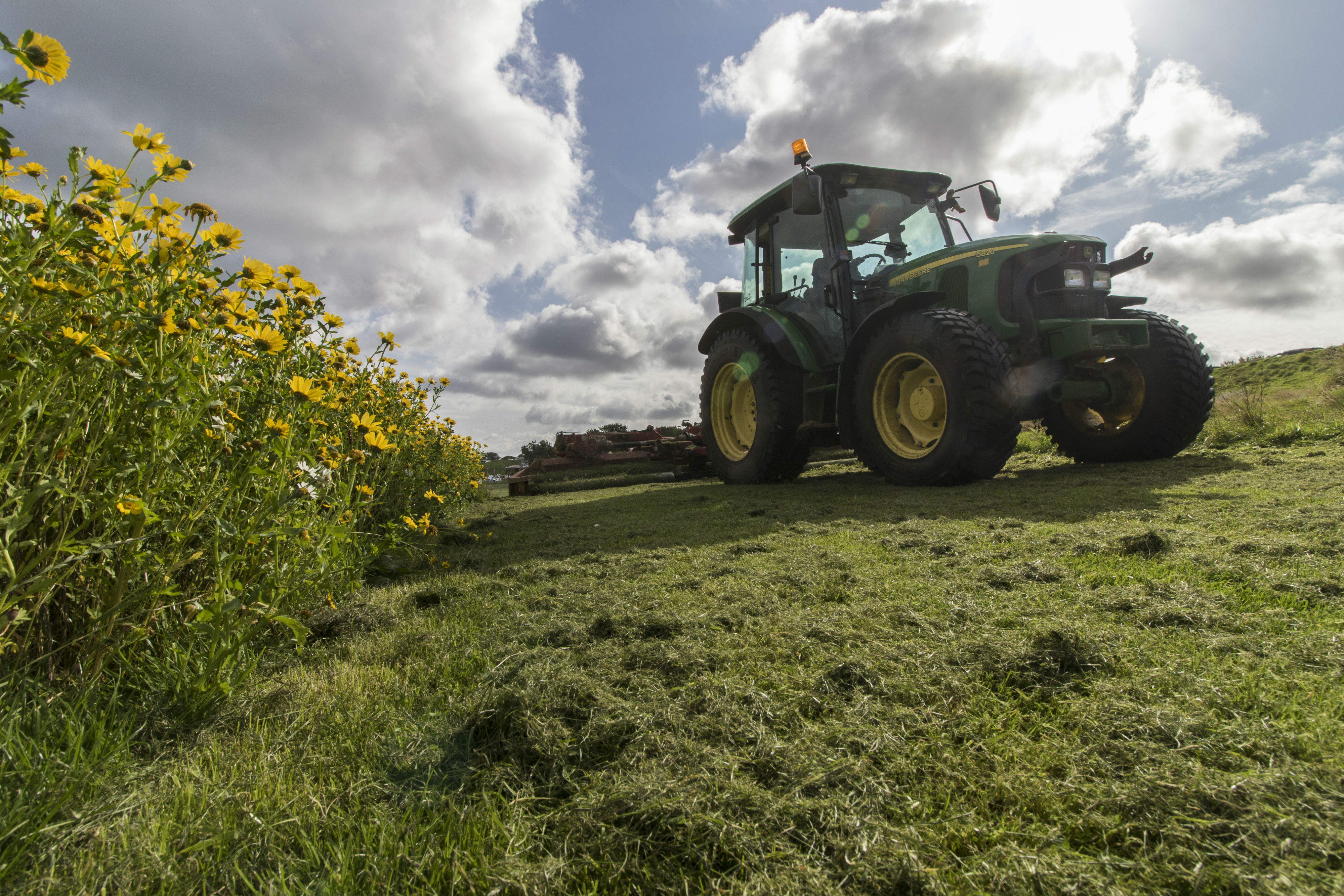 City of Edinburgh Council maintaining a wildflower meadow. Image by Barrie Williams.